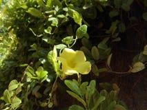JASNOŻÓŁTY kwiat I ZIELONA roślina fotografia royalty free