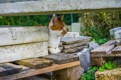 Jasnobrązowy i biały kota obsiadanie na betonów kamieniach w parku Obrazy Royalty Free