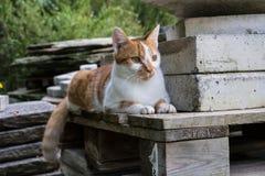 Jasnobrązowy i biały kota obsiadanie na betonów kamieniach w parku Zdjęcia Stock