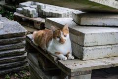 Jasnobrązowy i biały kota obsiadanie na betonów kamieniach w parku Fotografia Royalty Free