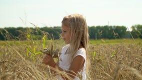 Jasnogłowa dziewczyna chodzi na podłoga Banatka Dziewczyna zbiera ucho złocista banatka w ręce Wręcza małe dziewczyny wolny zbiory