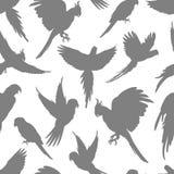Jasnopopielatej papugi sylwetki bezszwowy wzór ilustracji