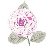 Jasnoróżowy kameliowy formalny kopii formy kwiat Zdjęcia Royalty Free