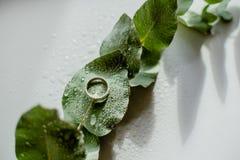 Jasnozielony Eukaliptusowy pierścionek zaręczynowy z wodnymi kroplami zdjęcia royalty free