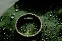 Jasnozielony Eukaliptusowy pierścionek zaręczynowy z wodnymi kroplami obrazy royalty free