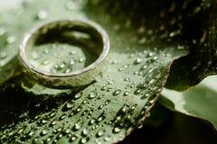 Jasnozielony Eukaliptusowy pierścionek zaręczynowy z wodnymi kroplami fotografia stock