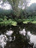 jasny i zimny źródło zimna woda obrazy stock