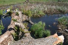 Jezioro i drzewo Zdjęcie Stock