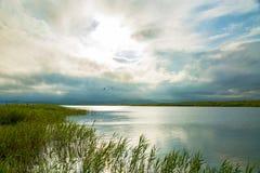 Jasny jezioro z zielonymi roślinami, gęsty zmrok chmurnieje zmierzch łama fotografia royalty free