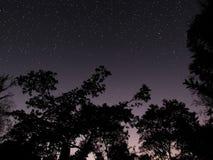 Jasny lasowy nocne niebo przy jutrzenkowym tłem Obraz Stock