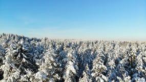 Jasny mroźny dzień w lasowych drzewach zakrywających z śniegiem Ptasi ` s oka widok Rosja St Petersburg region fotografia stock