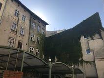 Jasny niebieskie niebo i bluszcz zakrywający budynek Obraz Stock