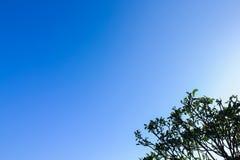 Jasny niebieskie niebo jako tło tapeta, pastelowa niebo tapeta z niektóre częścią drzewo, Zdjęcie Royalty Free