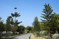 jasnych kwiatów parkowi nieba drzewa Fotografia Stock