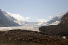 jasper för icefield för alberta athabascaKanada kanadensisk columbia berömd glaciär mest nationalpark tagna rockies Royaltyfri Foto