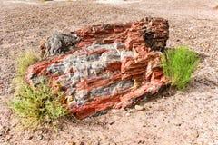 Jasper Forest - Forest National Park pétrifié Photo stock