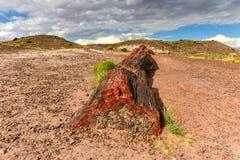 Jasper Forest - Van angst verstijfd Forest National Park royalty-vrije stock afbeeldingen