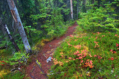 Jasper National Park Hiking Path Royalty Free Stock Image
