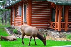 Jasper Park Lodge, Rocky Mountains, Westelijk Canada stock foto's