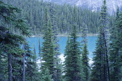 Jasper Park Mountain Lake Imagem de Stock