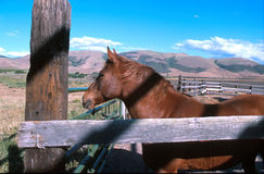 Jaspers view. Ranch horse with a view of mountians and blue sky stock photo
