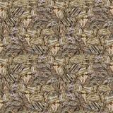 Jaspisowa zebra Obraz Stock
