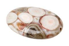 Jaspisowy koralik z skamielinami Fotografia Stock