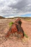 Jaspisowy las - Osłupiały Lasowy park narodowy Zdjęcia Royalty Free