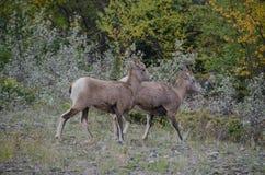 Jaspisowy park narodowy Zdjęcia Stock