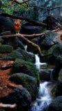 Jastrząb stoi bezczynnie zatoczki wodę fotografia stock