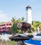 Jastrząbek dzióbać ryby w tle latarnia morska Phuket, Tajlandia obrazy royalty free
