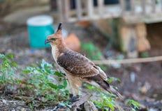 Jastrzębie w centrum szkoleniowym dla i dom od ekskrementu łowieckich ptaków i gacenie fabryki są opieką zdrowotną obraz royalty free