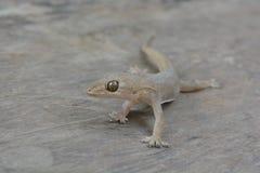 Jaszczurka Obraz Stock