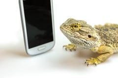 Jaszczurka i pokaz mądrze telefonu zbliżenie Fotografia Stock