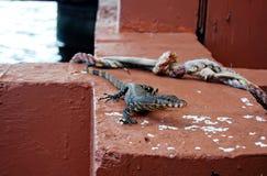 Jaszczurka jeziora molo zdjęcia stock