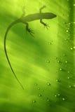jaszczurka liści, Zdjęcie Stock