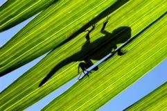 jaszczurka liści, Obrazy Stock