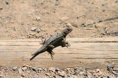 Jaszczurka na drewnie Zdjęcia Stock