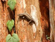 Jaszczurka na drzewie Obrazy Royalty Free
