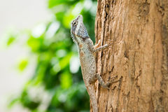 Jaszczurka na drzewie Zdjęcie Stock