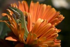 Jaszczurka na kwiacie obrazy royalty free