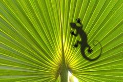 Jaszczurka na liść Zdjęcia Royalty Free