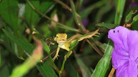 Jaszczurka na liściu Fotografia Royalty Free