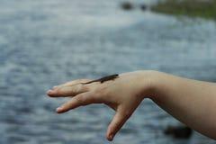 Jaszczurka na ręce Fotografia Royalty Free