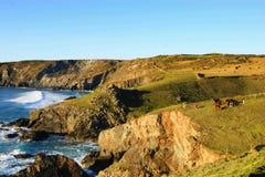 Jaszczurka punkt, Południowo-zachodni Nabrzeżna ścieżka, Cornwall, uk Zdjęcie Royalty Free