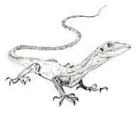Jaszczurka, ręka malował rysunek kontur Obraz Stock