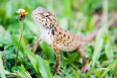 Jaszczurka w dziki koncentrować na kwiacie Fotografia Royalty Free