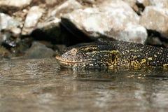 Jaszczurka w Rzeczny Nil - Uganda, Afryka obraz stock