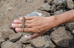 Jaszczurka z jedzeniem na ludzkiej ręce zdjęcie royalty free