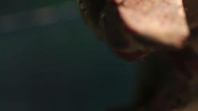 Jaszczurki głowa na zamkniętych terminach zbiory